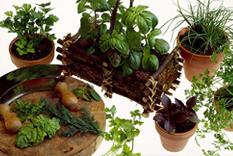 Fragrance Flowring Plants